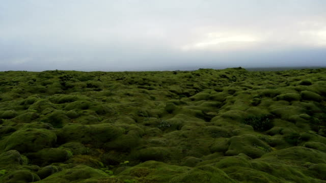 Mountain landscape with moss