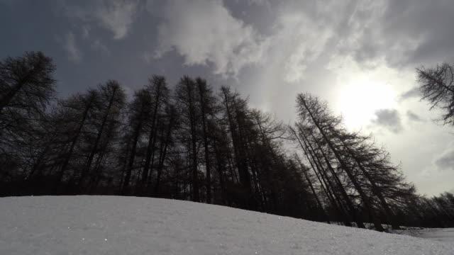 vídeos de stock e filmes b-roll de mountain landscape with snow, forest - reserva selvagem