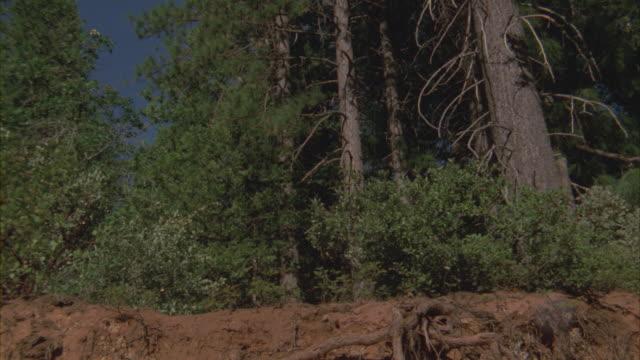 vídeos y material grabado en eventos de stock de a mountain lion runs down a dirt hill. - puma