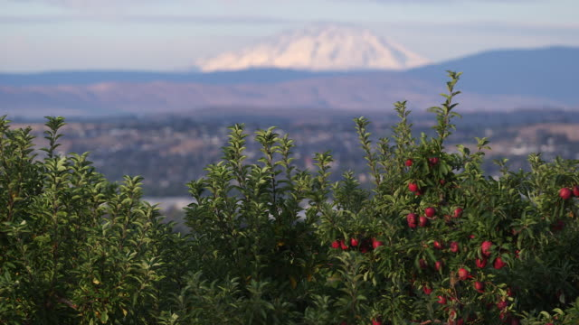 mountain over apple trees - wiese stock videos & royalty-free footage