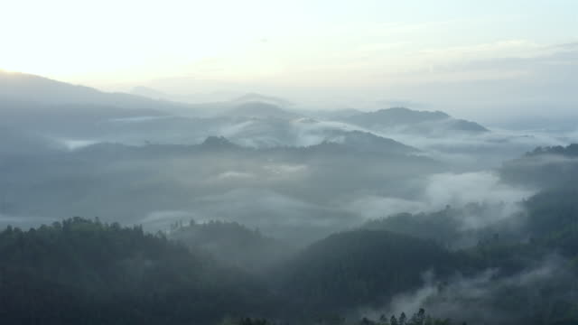 stockvideo's en b-roll-footage met de regenwoudlucht van de berg - bos