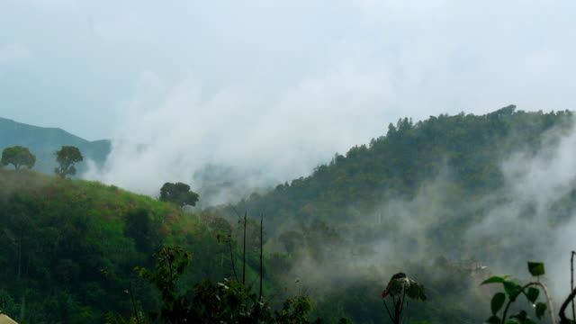 mountain rainforest with clouds in jamaica. - jamaica stock videos & royalty-free footage