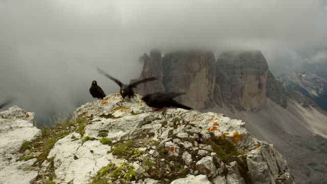 mountain raven in the dolomites - perching stock videos & royalty-free footage