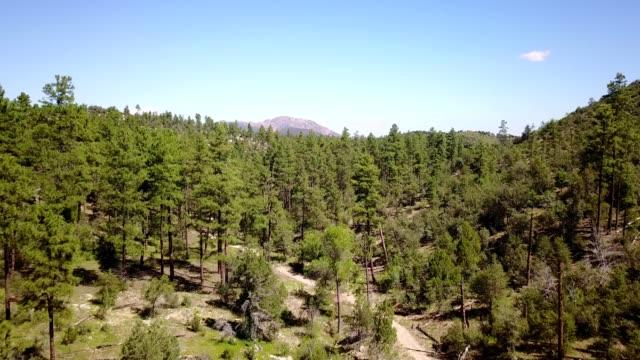 Mountain Reveal over Pine Trees in Prescott Arizona