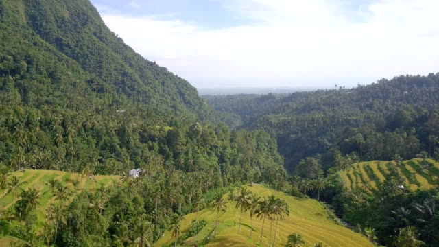 mountain rice terrace north bali drone view - north bali stock videos & royalty-free footage