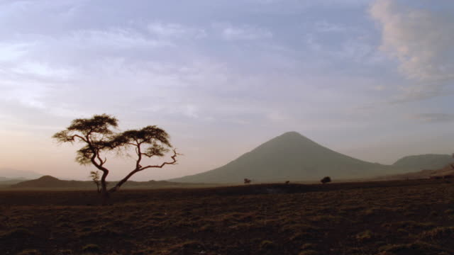 a mountain rises above an african savanna. - acacia tree stock videos & royalty-free footage