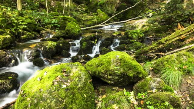 vidéos et rushes de rivière de montagne en forêt - mousse végétale