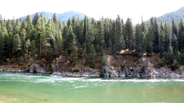 mountain river running through pine forest - snake river stock videos and b-roll footage