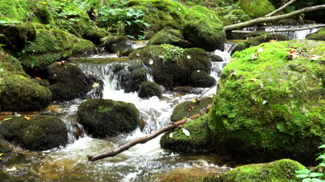 Gebirgsfluss durch Wald