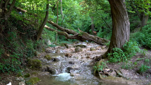mountain river - spring flowing water stock videos & royalty-free footage