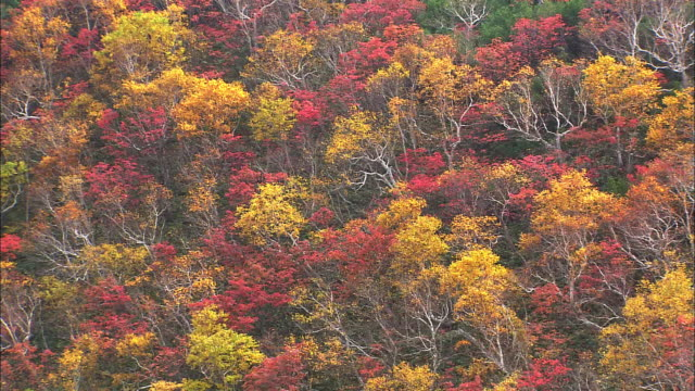 mountain slopes of mosaic patterns in autumn colors medium tight shot - season stock videos & royalty-free footage