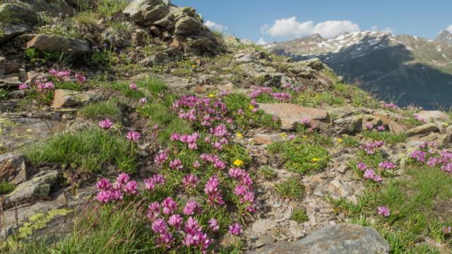 mountain spring - 30秒以上点の映像素材/bロール