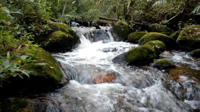 vídeos y material grabado en eventos de stock de río de montaña en el bosque de la primavera verde - aguja parte de planta