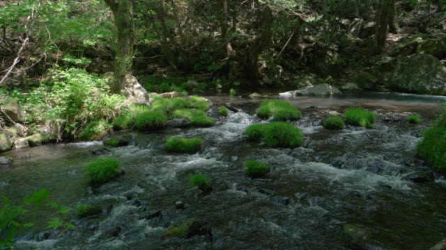 mountain stream in spring - satoyama scenery stock videos & royalty-free footage