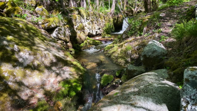 mountain stream through forest - austria stock videos & royalty-free footage