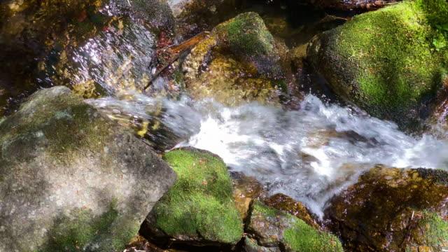 gebirgsbach durch wald - österreich stock-videos und b-roll-filmmaterial
