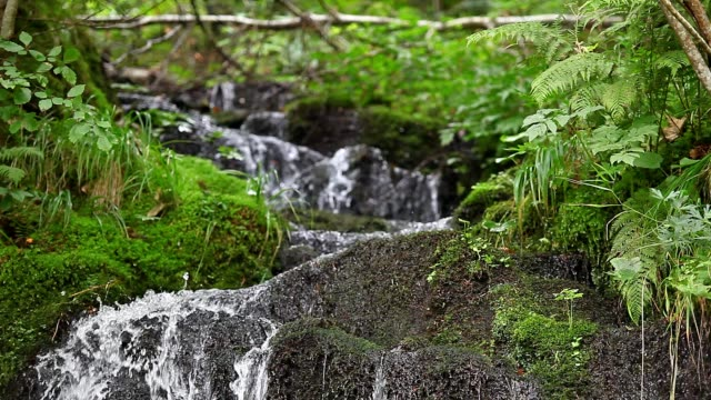 A mountain stream trickles down a rocky, wooded hillside.