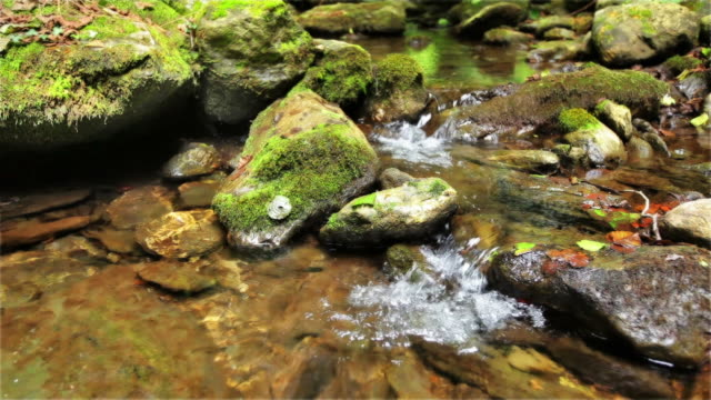 mountain stream - running water stock videos & royalty-free footage