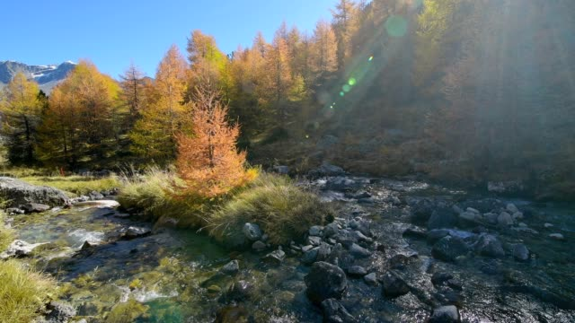 mountain stream with larch trees in autumn, silvaplana, julierpass, engadin, grisons, switzerland, european alps - viewpoint stock videos & royalty-free footage