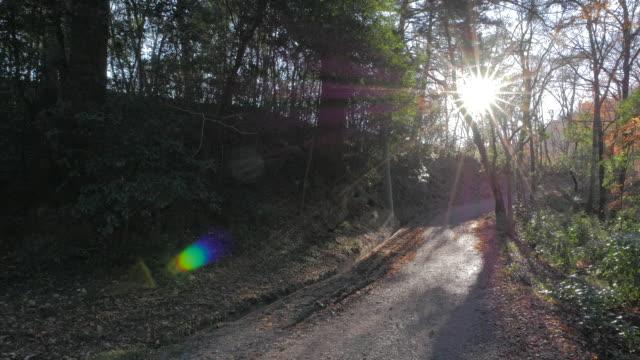 Mountain trail in Hodosan mountain with sunlight, Chichibu