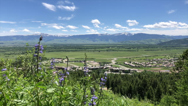 mountain wildflowers and town - wyoming stock-videos und b-roll-filmmaterial
