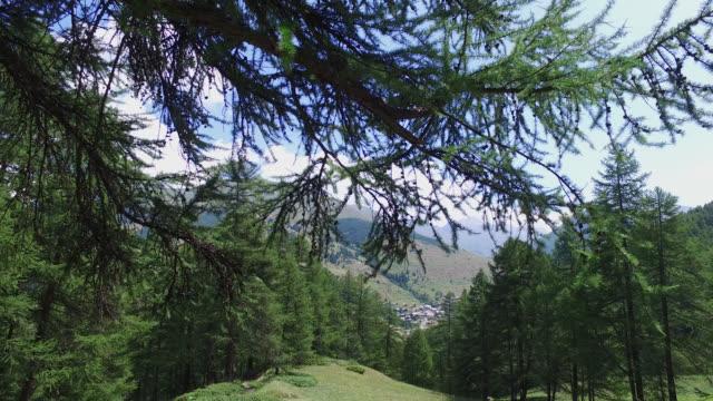 vídeos y material grabado en eventos de stock de mountain with trees with a village in the background - pinaceae