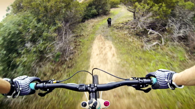 stockvideo's en b-roll-footage met mountainbike video in mediterranean vegetation with a dog - onverharde weg