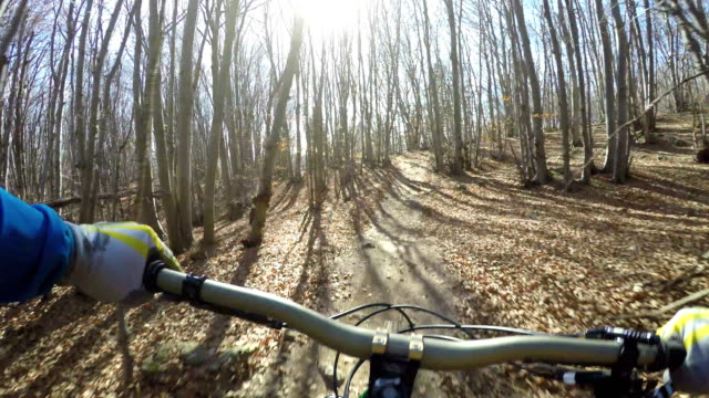 Mountain-biker descends on forest trail
