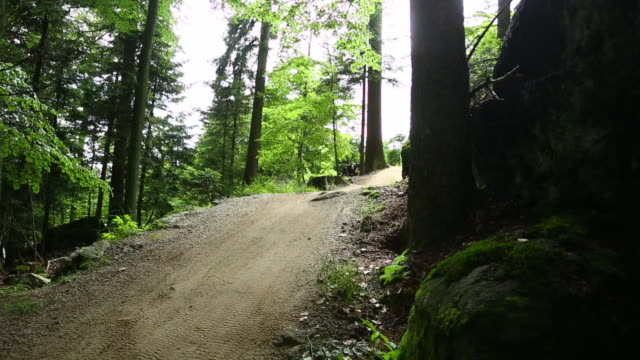 vídeos de stock, filmes e b-roll de mountainbikers riding downhill forest track - floresta da bavária
