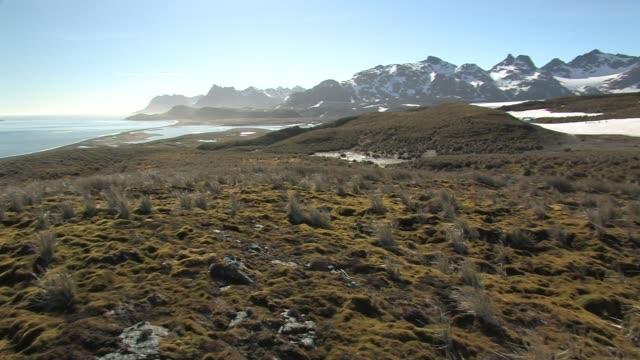 WS, PAN, Mountains along shoreline, king penguin (Aptenodytes patagonicus) rookery in distance, South Georgia Island, Falkland Islands, British overseas territory