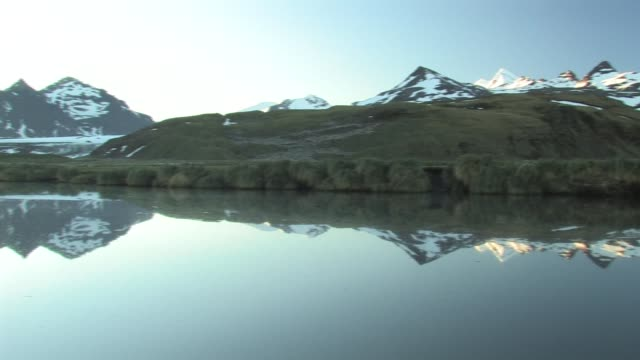 ws, pan, mountains and foothills reflected in pond, king penguin (aptenodytes patagonicus) rookery on hillside, south georgia island, falkland islands, british overseas territory - south georgia island stock videos & royalty-free footage