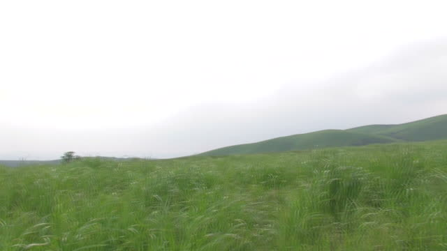 pan mountains and green field - alm stock-videos und b-roll-filmmaterial
