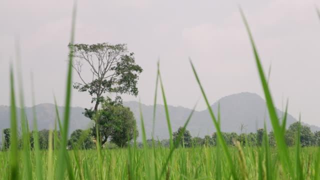vidéos et rushes de ms mountains au-delà domaine luxuriant et verdoyant, sri lanka - culture sri lankaise