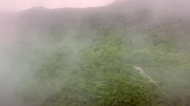 mountains covered with tropical rainforest and steam - bush stock videos & royalty-free footage