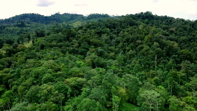 mountains covered with tropical rainforest. turquoise river - america centrale video stock e b–roll