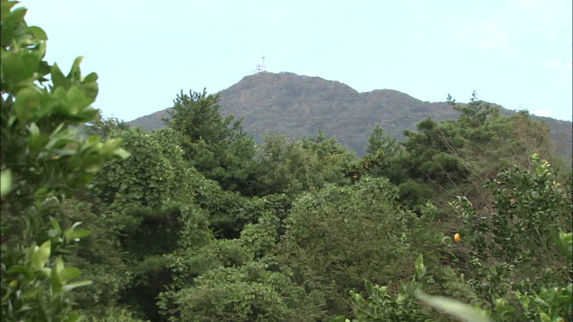 mountains overlook an orange grove. - オレンジ果樹園点の映像素材/bロール