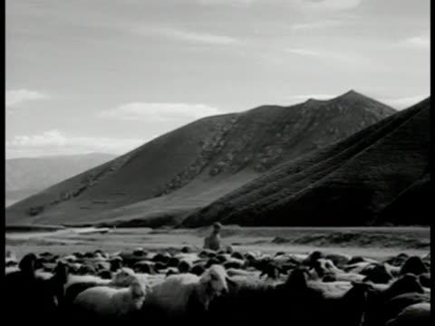 vidéos et rushes de mountains. sheep & herders shephards moving on meadow plains foothills bg. - herding