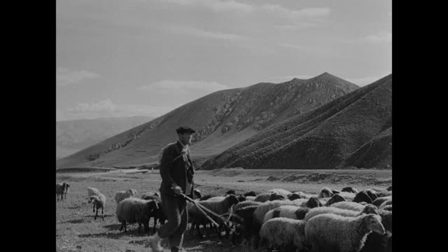 Mountains / Sheep herders shephards moving on meadow plains foothills BG