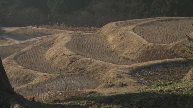Mountains surround the Oyama Senmaida Rice Terraces in Chiba, Japan.