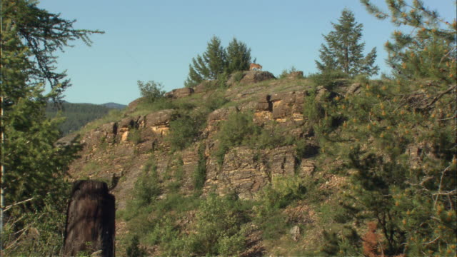 a mounted cowboy watches a puma walk down a hill. - puma stock videos & royalty-free footage