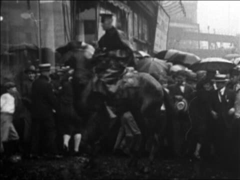 b/w 1926 mounted policeman herding crowd in rain on nyc street / rudolph valentino's funeral / news - herbivorous stock videos & royalty-free footage