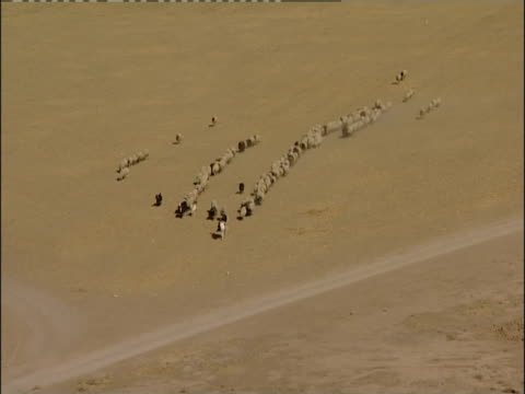 A mounted shepherd herds sheep and goat in the desert.