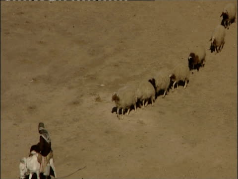 vídeos de stock e filmes b-roll de a mounted shepherd leads a herd of sheep and goats across the desert. - iraque