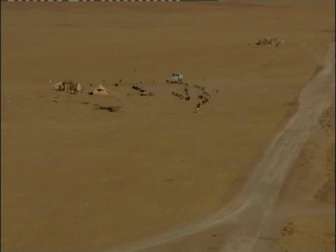 a mounted shepherd leads a herd of sheep away from a bedouin camp. - wirbeltier stock-videos und b-roll-filmmaterial