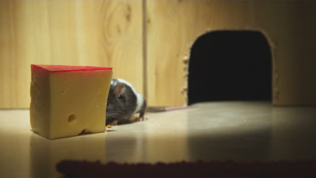 ms, mouse eating swiss cheese in front of mouse hole - käse stock-videos und b-roll-filmmaterial