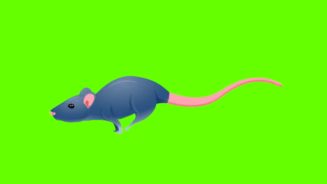 mouse run cycle animation - mouse stock videos & royalty-free footage