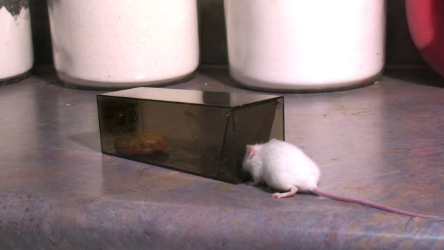 mouse trapped - trapped stock videos & royalty-free footage