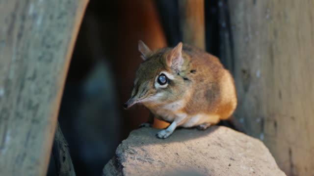 vídeos de stock e filmes b-roll de do rato - nariz de animal