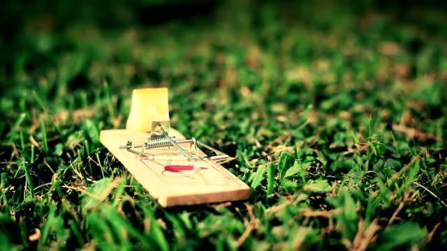 stockvideo's en b-roll-footage met hd: mousetrap on a meadow - knaagdier