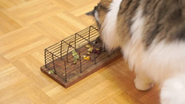 mousetrap with a mouse and a cat - sick prisoner stock videos & royalty-free footage